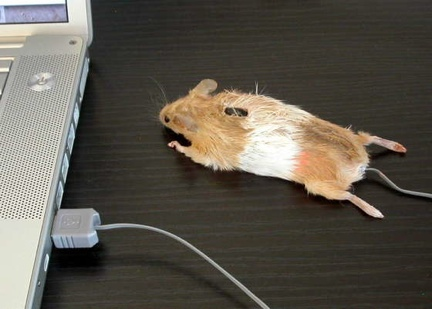 mousereal.jpg