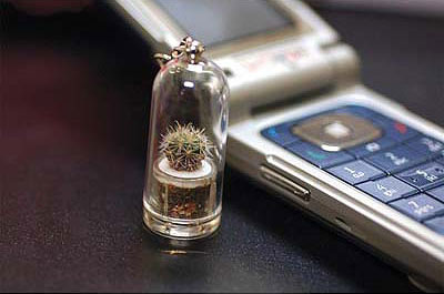 Pet Tree Mini Live Cactus